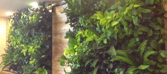 壁面緑化プラティコの作り方